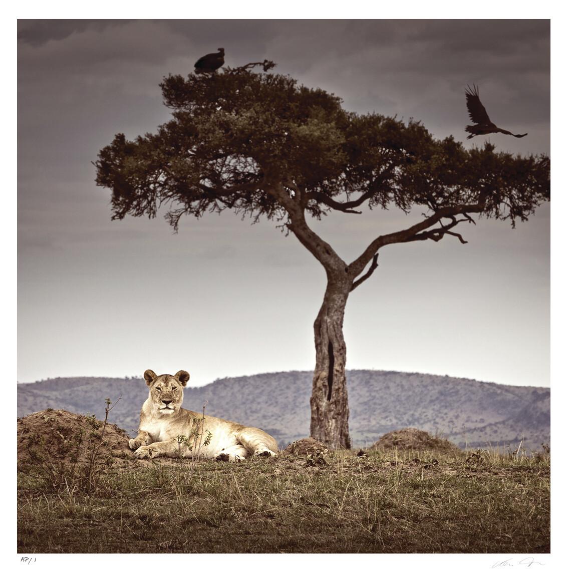 Observance | Ltd Ed | Klaus Tiedge
