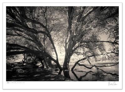 Ethereal Reverie No.4 | Ed 20 | Martin Osner