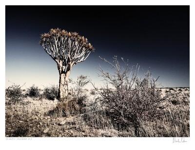 Desolate Splendour No.8   Martin Osner