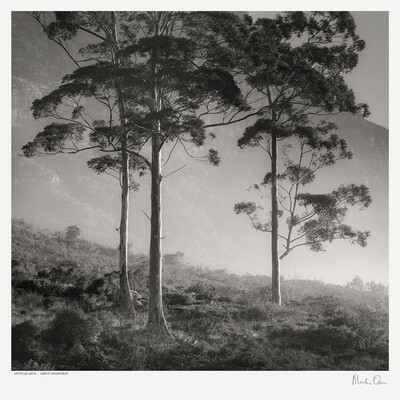 Classic Black and White | Cecelia View - Table Mountain | Martin Osner