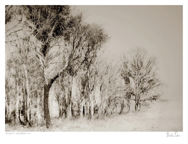 Desolate Splendour No.9 | Martin Osner