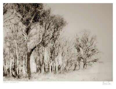 Desolate Splendour No.9   Martin Osner