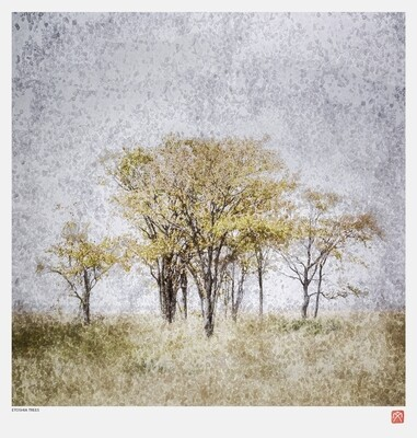 African Crystal | Etosha Trees | Fumi Hirai