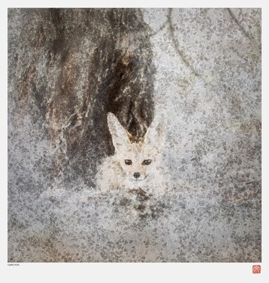 African Crystal | Cape Fox | Fumi Hirai