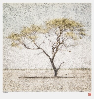 African Crystal | Acacia Tree | Fumi Hirai