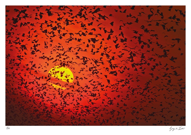 Patterns of Africa | Kasanke Sunrise | Ed 10 | Greg Du Toit