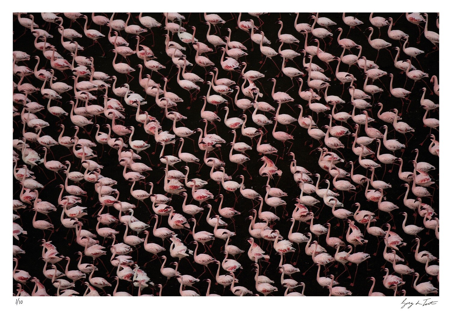 Patterns of Africa | Stand of Flamingos | Ed 10 | Greg Du Toit