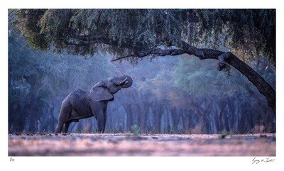 Classic Collection - Elephant Forest | Ed 10 | Greg Du Toit