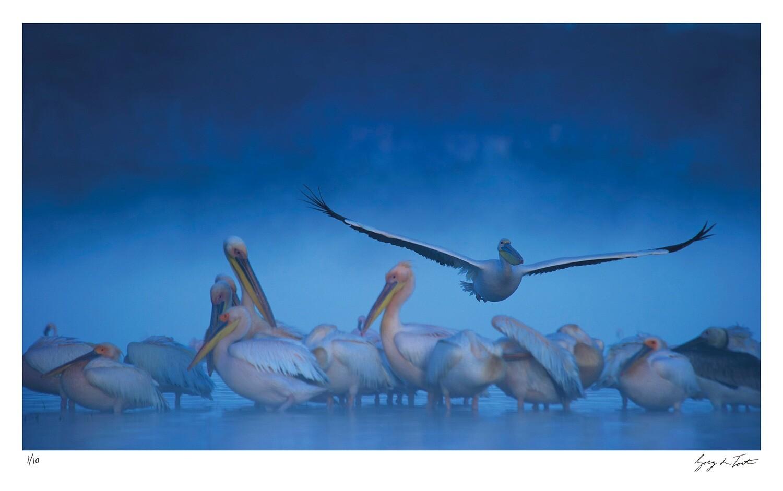 Classic Collection - Pelican Mist | Ed 10 | Greg Du Toit