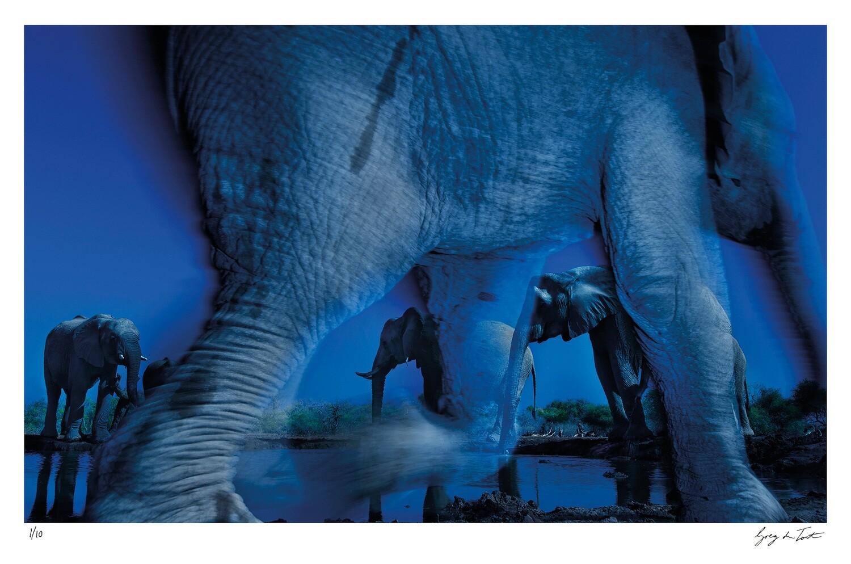 Ethereal Collection - Essence of Elephants | Ed 10 | Greg Du Toit
