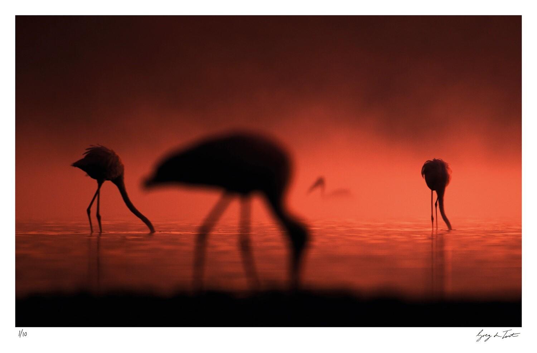 Ethereal Collection - Stork Impressions | Ed 10 | Greg Du Toit