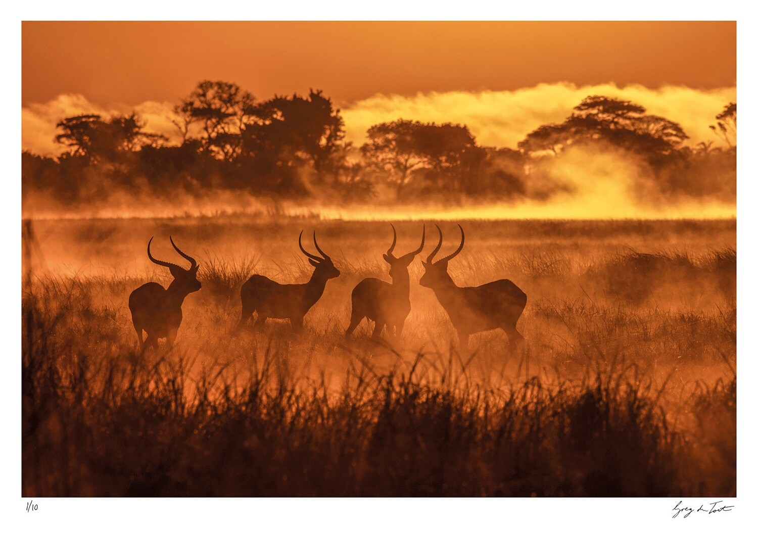 Ethereal Collection - Lechwes in the Mist   Ed 10   Greg Du Toit