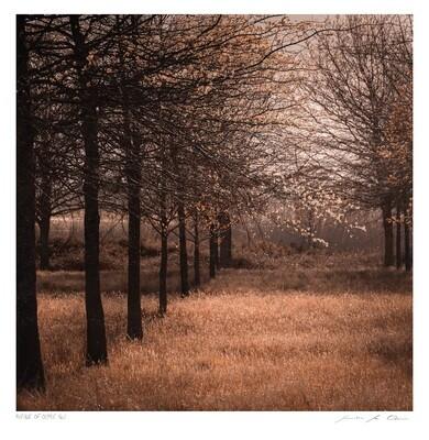 Avenue of Ochre No.1 | Ltd Ed | Samantha Lee Osner