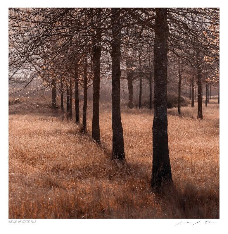 Avenue of Ochre No.3 | Ltd Ed | Samantha Lee Osner