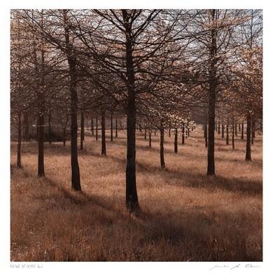 Avenue of Ochre No.2 | Ltd Ed | Samantha Lee Osner