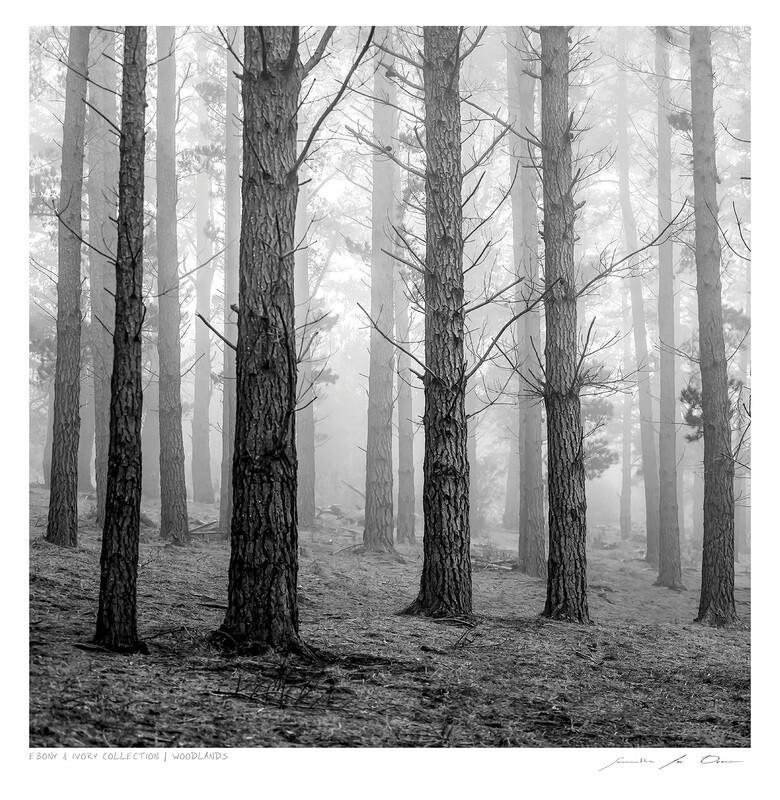 Ebony & Ivory - Woodlands | Ltd Ed | Samantha Lee Osner