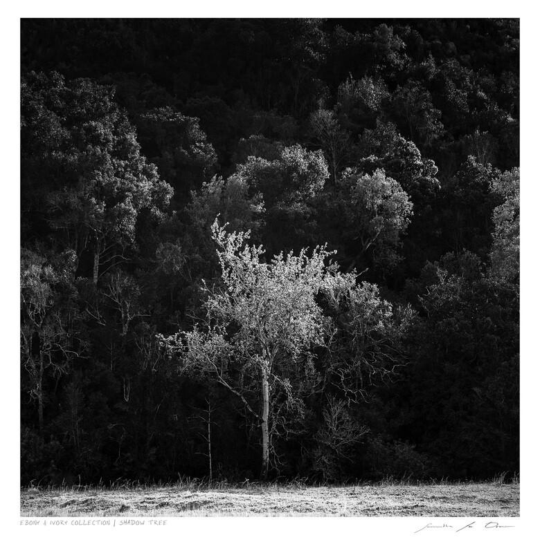 Ebony & Ivory - Shadow Tree | Ltd Ed | Samantha Lee Osner