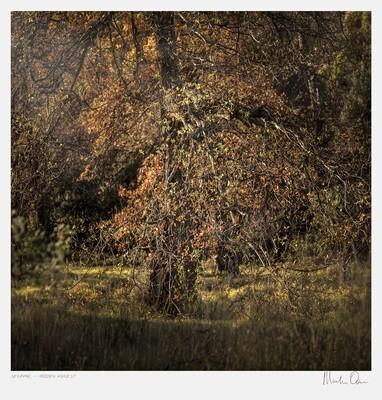 Seraphic | Hidden Forest | Martin Osner