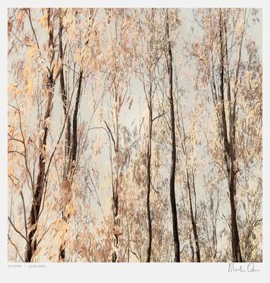 Seraphic | Woodlands | Martin Osner