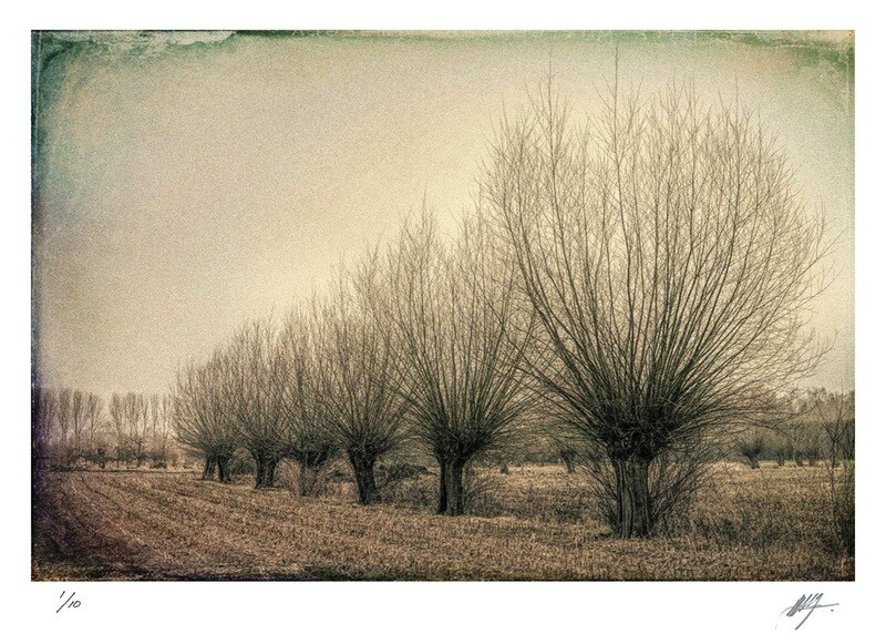 Landscape with bare trees | East Flanders | Ed 10 | Harry De Zitter