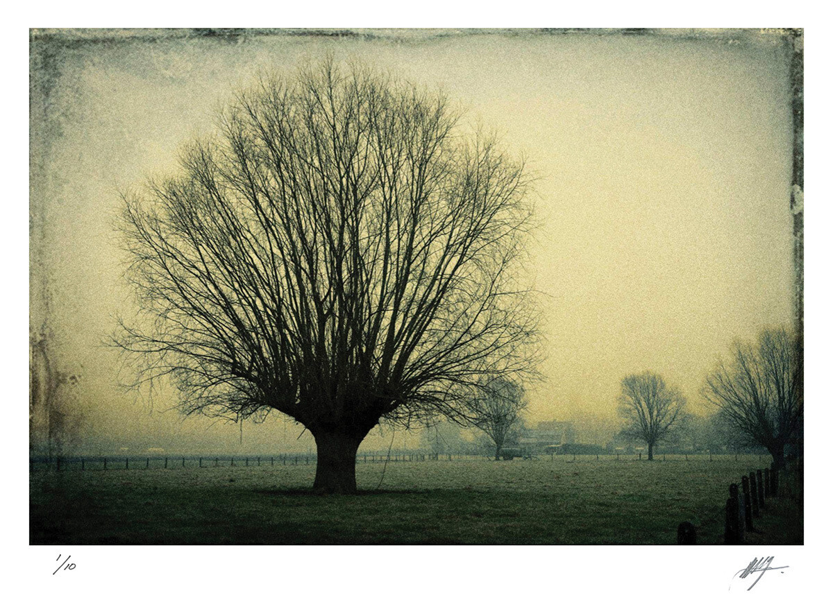 Bare trees | East Flanders | Ed 10 | Harry De Zitter