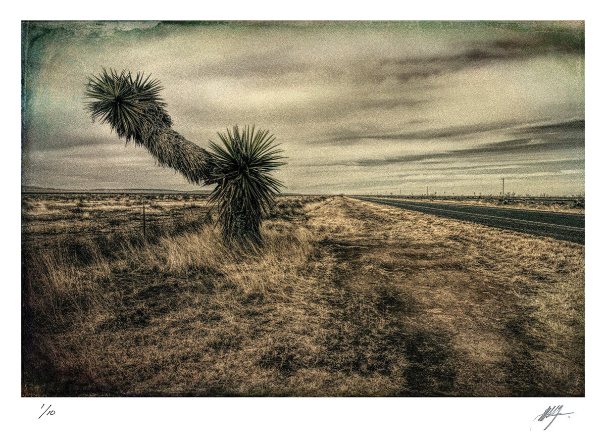 Landscape with palm trees | Route 90 | Ed 10 | Harry De Zitter