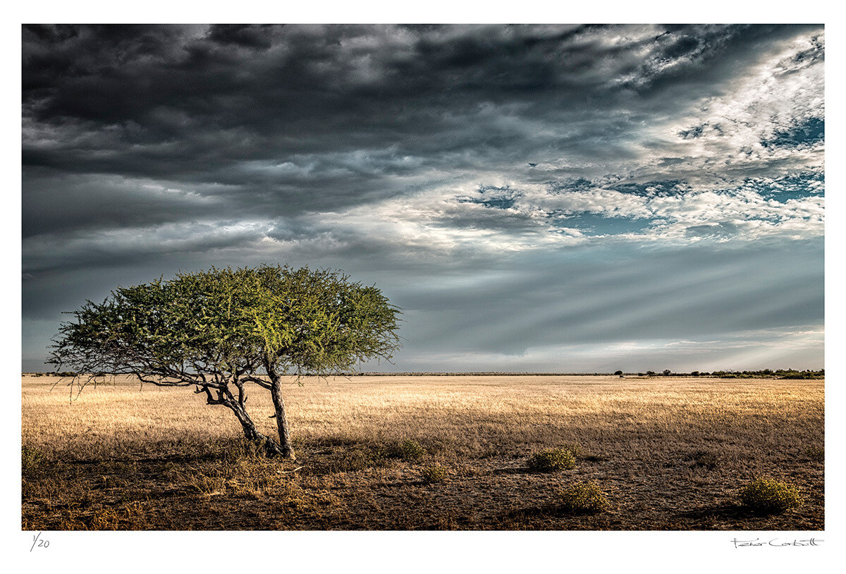 Lone ghost tree | Ed 20 | Peter Corbett