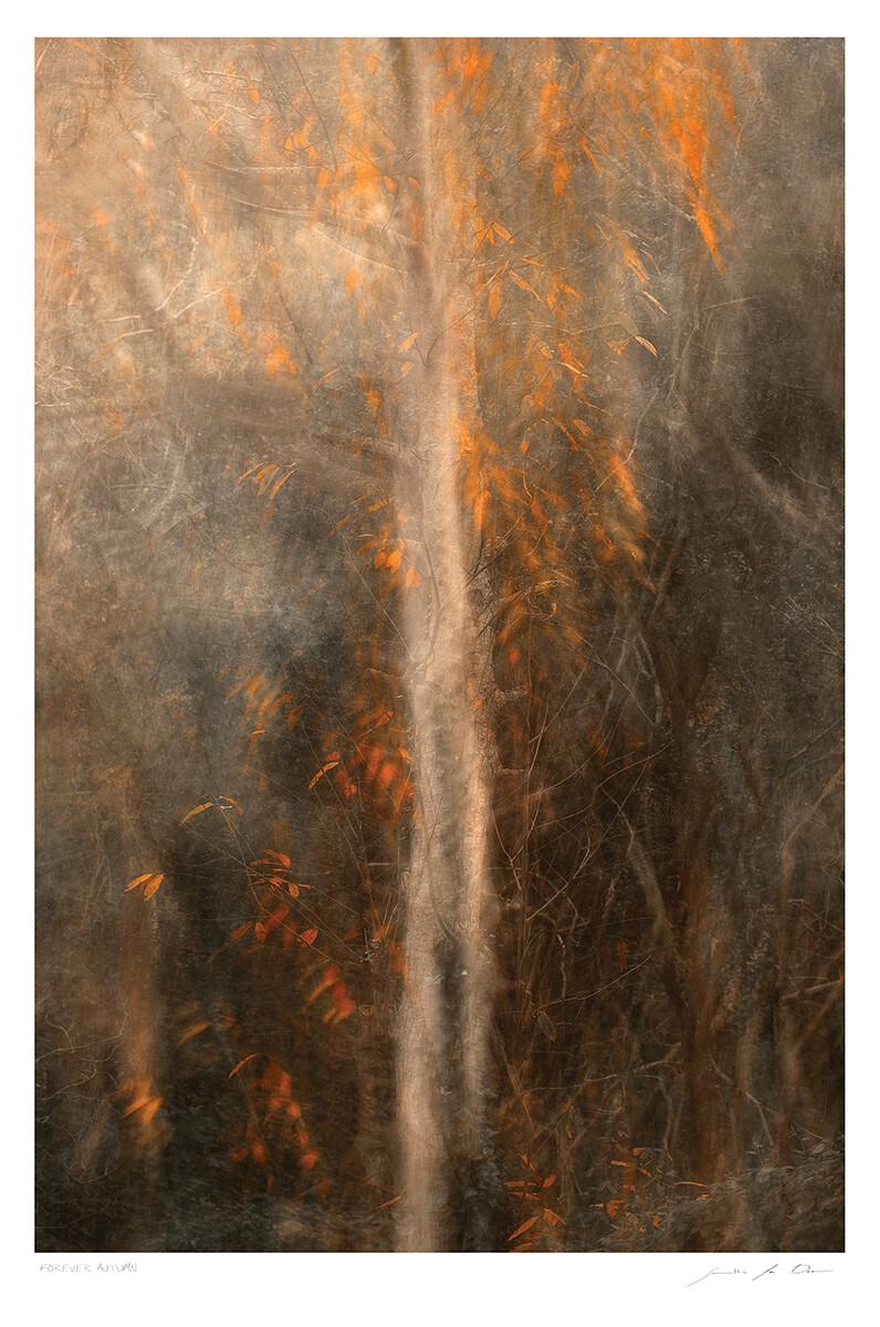 Forever Autumn | Samantha Lee Osner