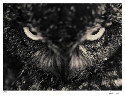 Creatures No.11 | Ed 20 | Antti Viitala