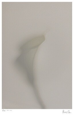 The Veil | Limited 50 | Martin Osner