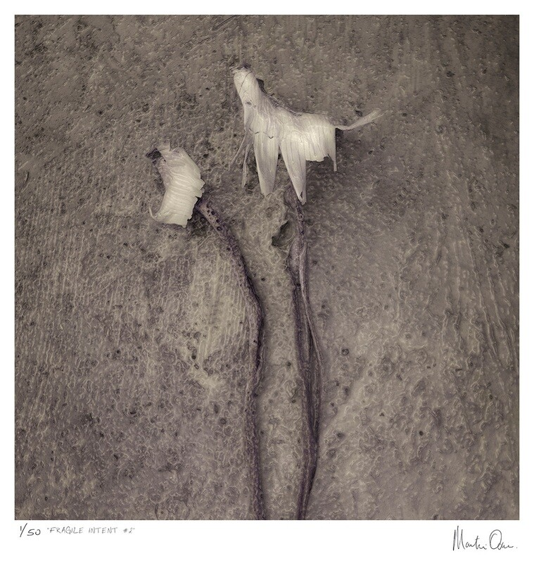 Fragile Intent No.2 | Ed 50 | Martin Osner