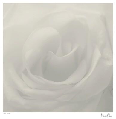 The Rose | Martin Osner