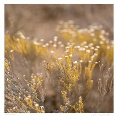 Fynbos in Autumn | Samantha Lee Osner