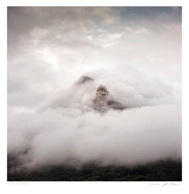 Misty Lions Head | Samantha Lee Osner