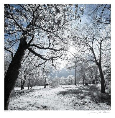 Névé No.2 | Ltd Ed | Samantha Lee Osner