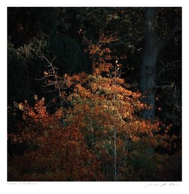 Passage to Autumn No.1 | Samantha Lee Osner