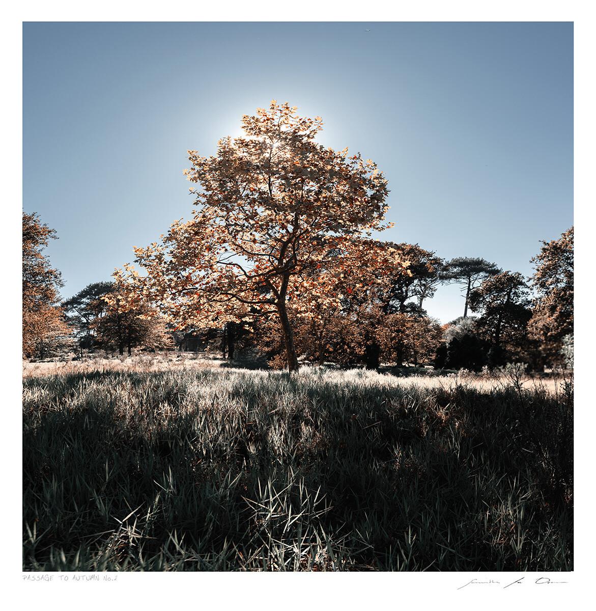 Passage to Autumn No.2 | Samantha Lee Osner