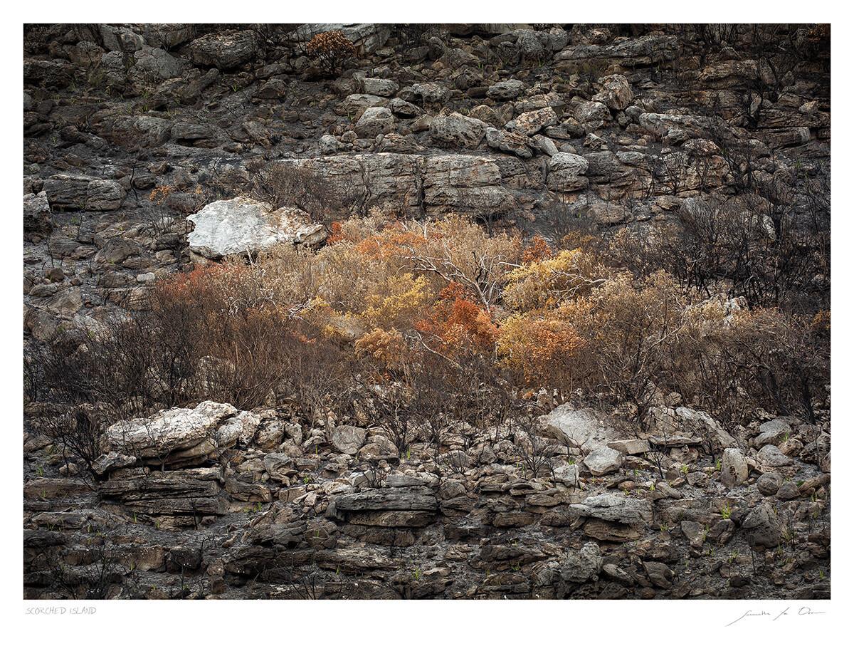 Scorched Island | Samantha Lee Osner