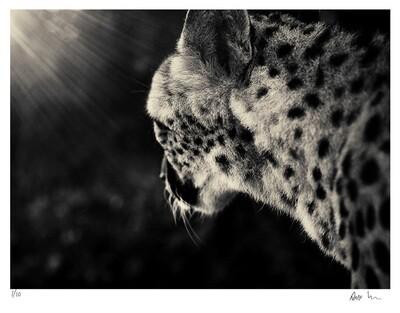 Creatures No.3 | Ed 20 | Antti Viitala