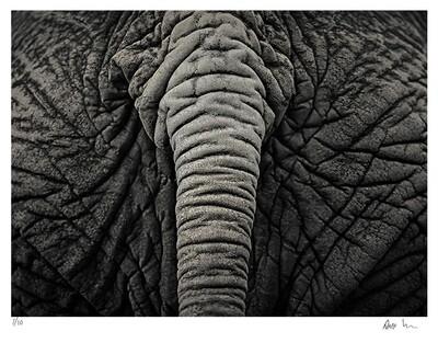 Creatures No.1 | Ed 20 | Antti Viitala
