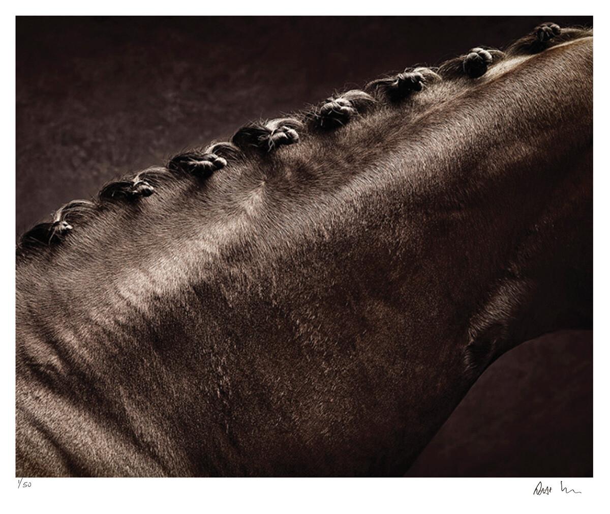 Warmbloods No.4 | Ed 50 | Antti Viitala