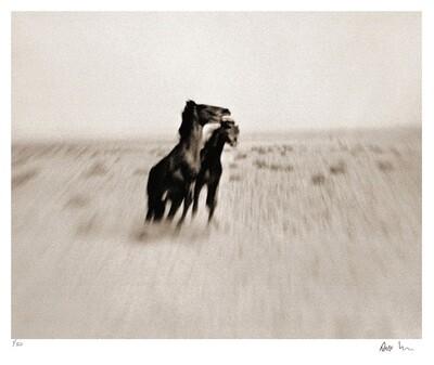 Wild Horses of the Namib No.1 | Ed 50 | Antti Viitala