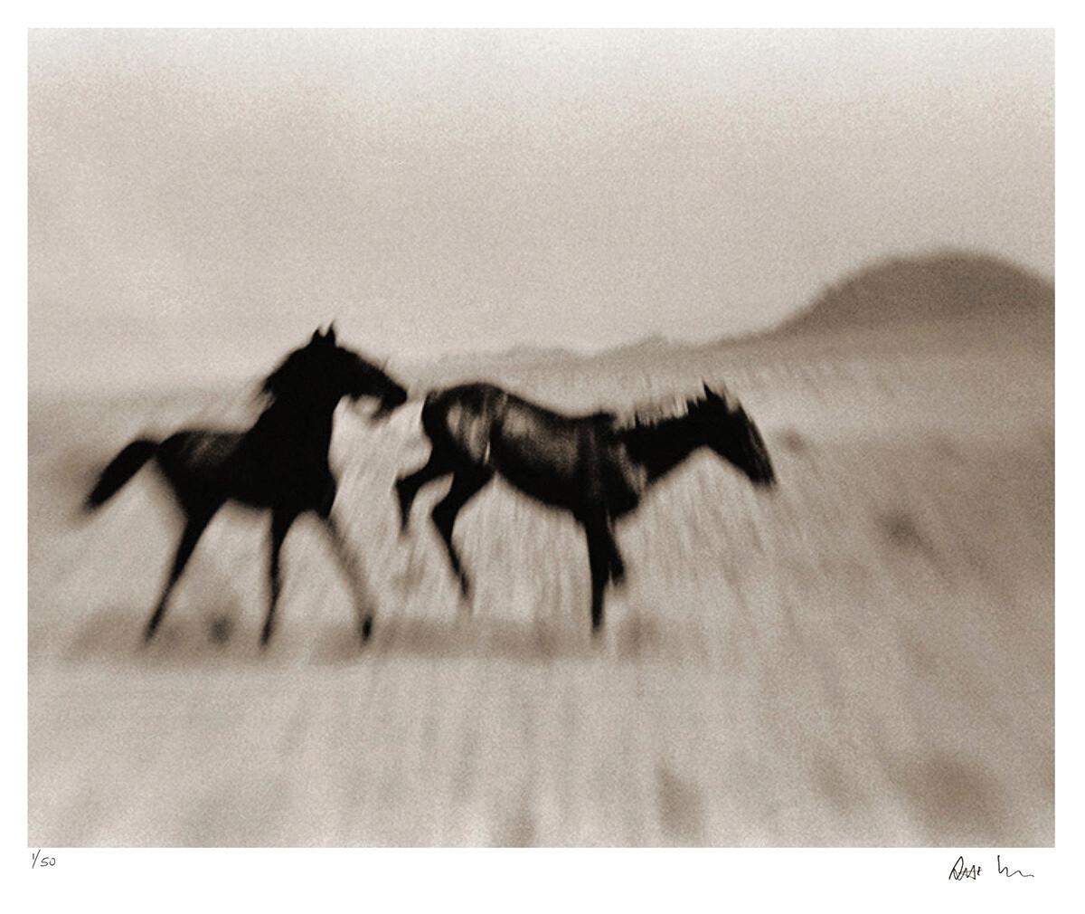 Wild Horses of the Namib No.5 | Ed 50 | Antti Viitala