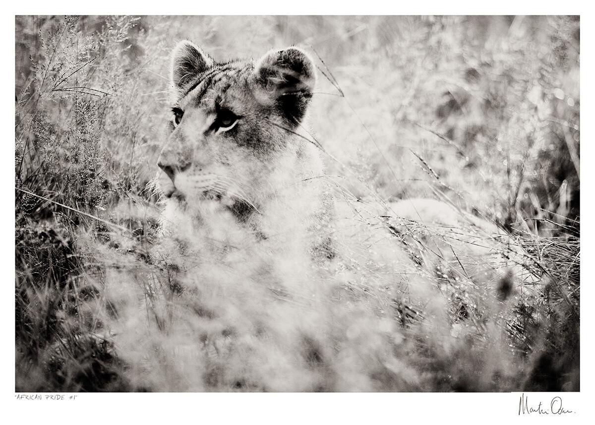 African Pride No.1 | Martin Osner