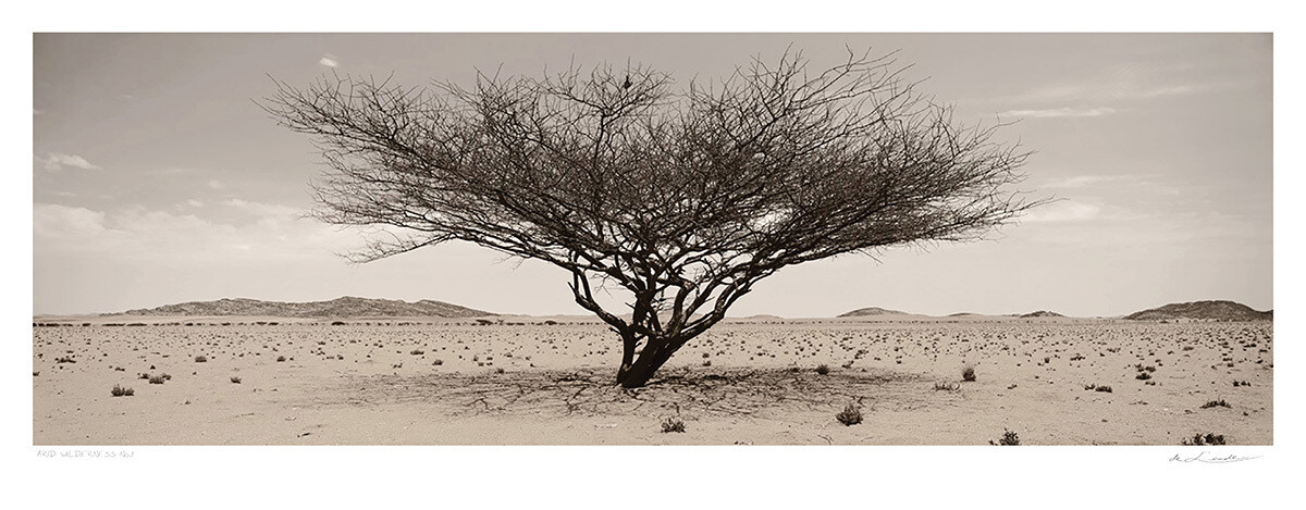 Arid wilderness No.1 | Ed 25 | Koos van der Lende