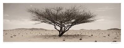 Arid wilderness No.1 | Ed 25 | Koos van der Lende