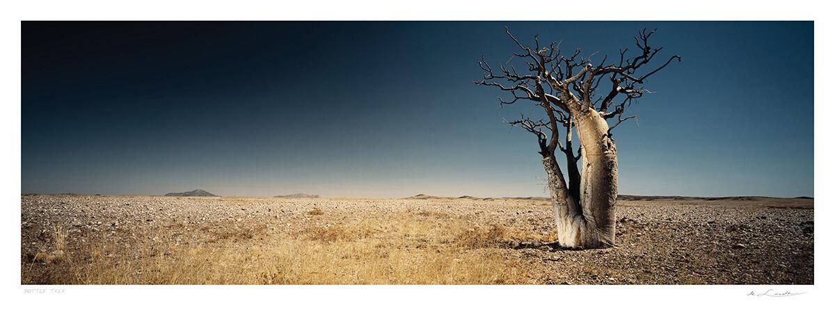 Bottle Tree | Ed 25 | Koos van der Lende
