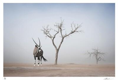 Oryx | Ed 8 | Hougaard Malan