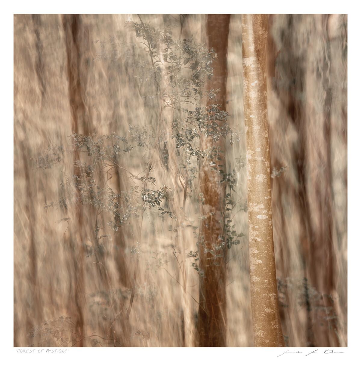 Forest of Mystique | Samantha Lee Osner