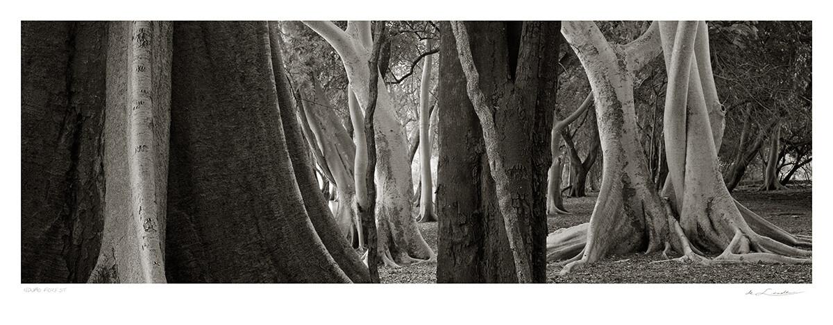Ndumo Forest | Ed 25 | Koos van der Lende
